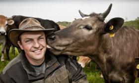 Morten elsker sine køer