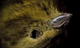 Død fugl