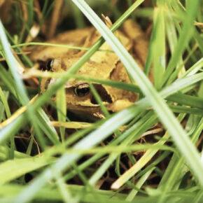 Film: Natur i økologisk landbrug