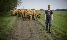 Ung landmænd med køer