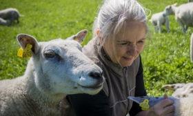 Birgitte med får fra Troldgården
