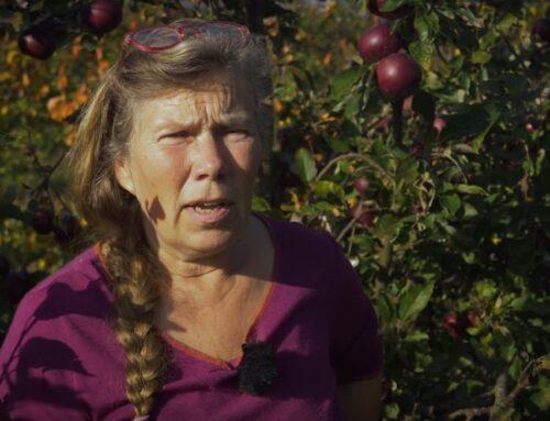 Film: Strynø Frugthave