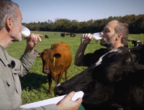 Film: Thises Græsmælk